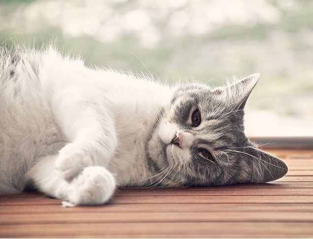 Как успокоить кошку естественным путем