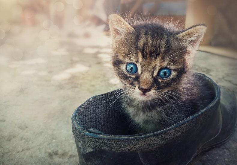 Как узнать, бросила ли кошка своих котят
