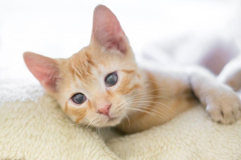 Как узнать, ослепла ли ваша кошка