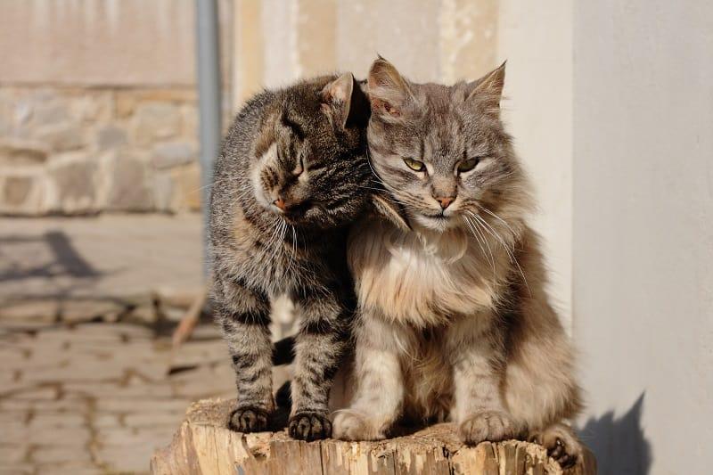 Как узнать, привязаны ли кошки