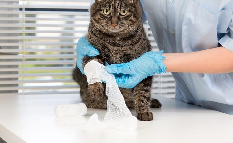Как узнать, если у кошки сломаны ноги