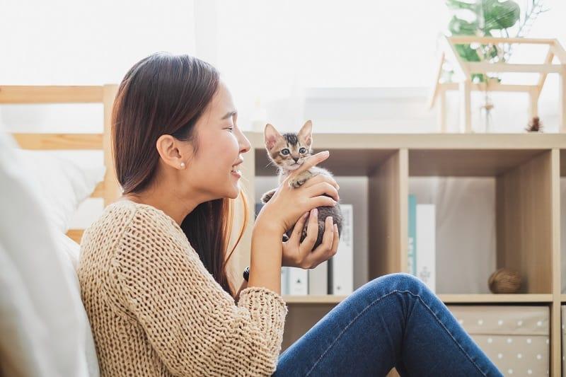 Как вырастить котенка ласковым