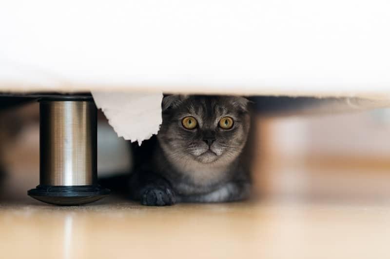 Как вытащить кошку из-под кровати