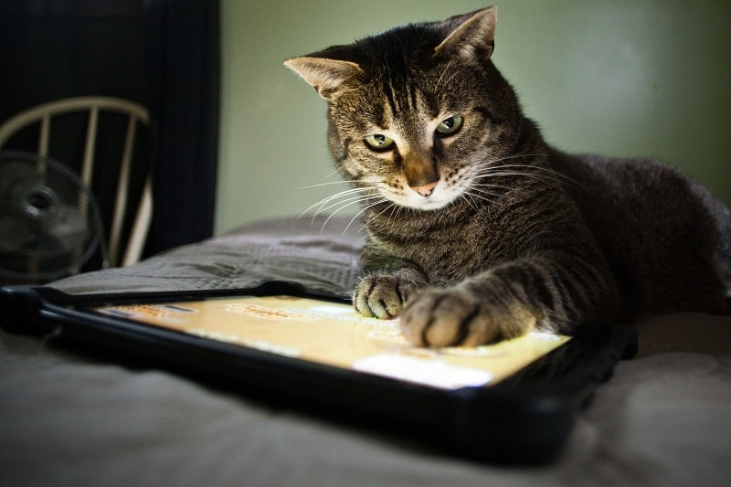 Как защитить шнуры от кошек