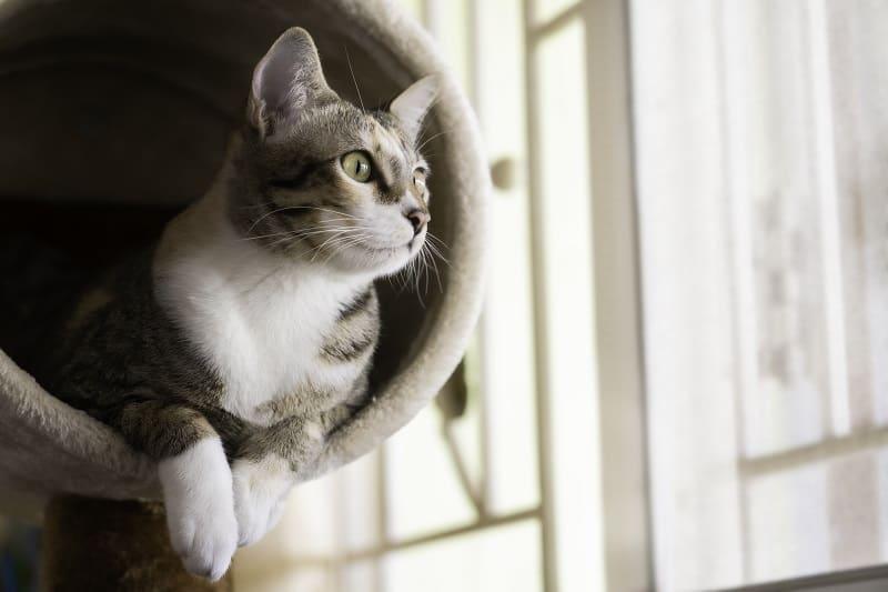 Как заставить кошку использовать кошачье дерево