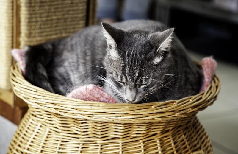 Как заставить кошку спать в новой постели?
