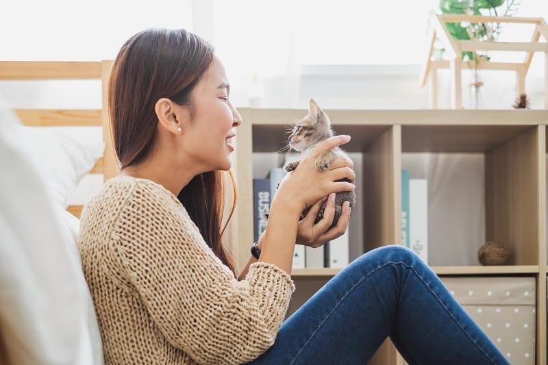 Как заставить вашего котенка полюбить вас