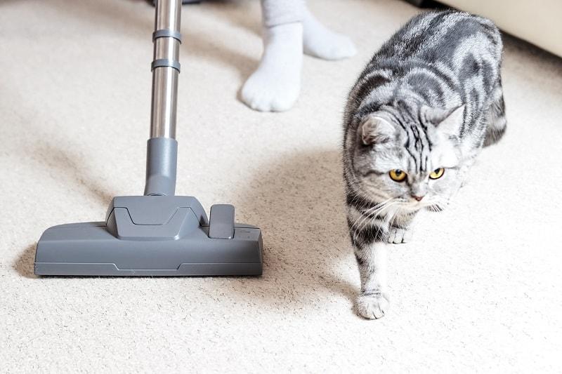 Какие звуки ненавидят кошки