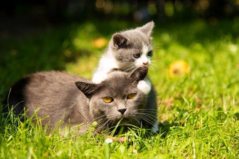 Когда кошки бросают своих котят