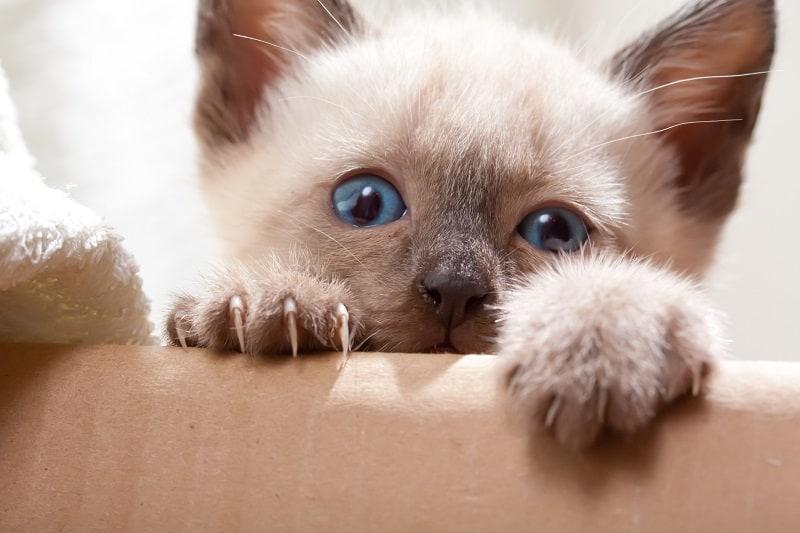 Когда котята учатся убирать когти?