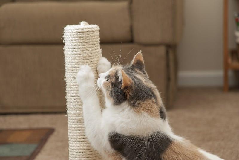 Колпачки для кошачьих ногтей: плюсы и минусы
