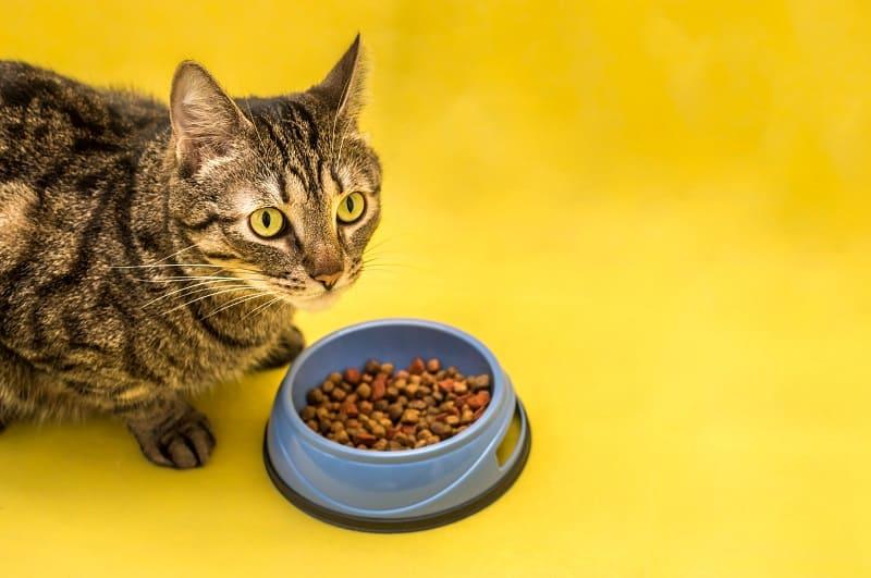 Корм для кошек, одобренный AAFCO