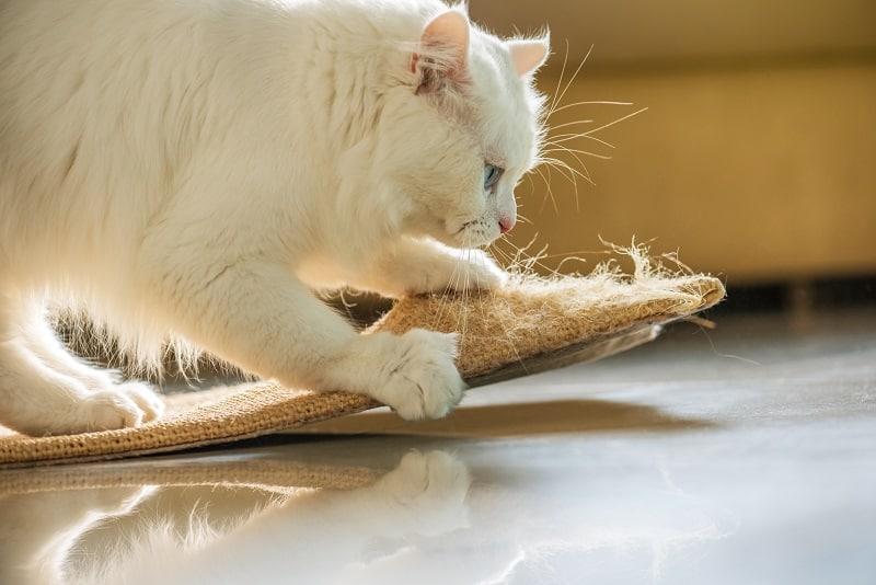 Кошачьи горбинки во время замешивания