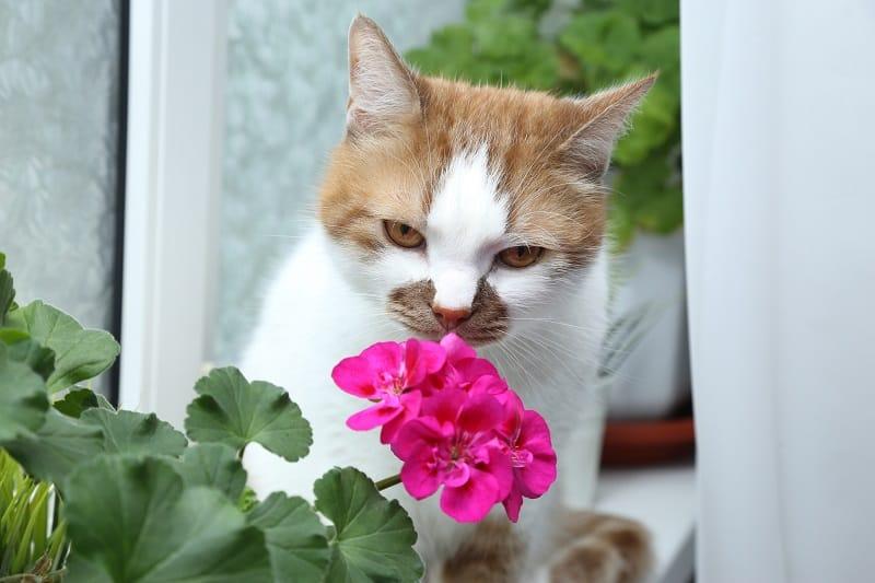 Кошачьи запахи