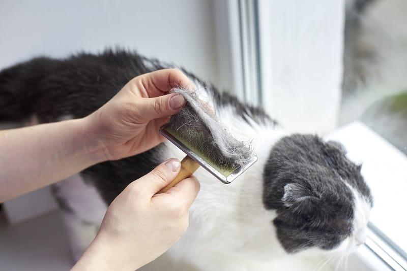 Кошачий спутанный мех у хвоста