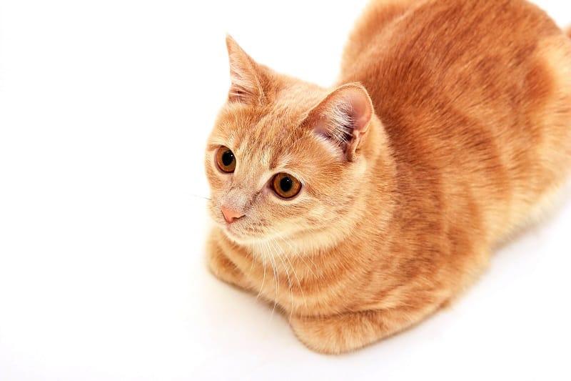 Кошачий хлеб - что это значит