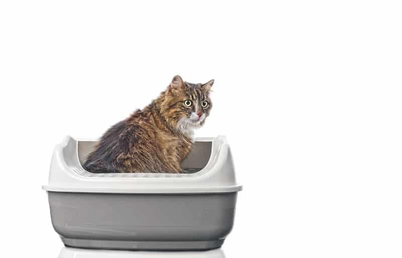 Кошка царапает сторону туалета