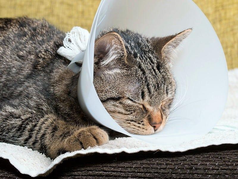 Кошка не ест после операции