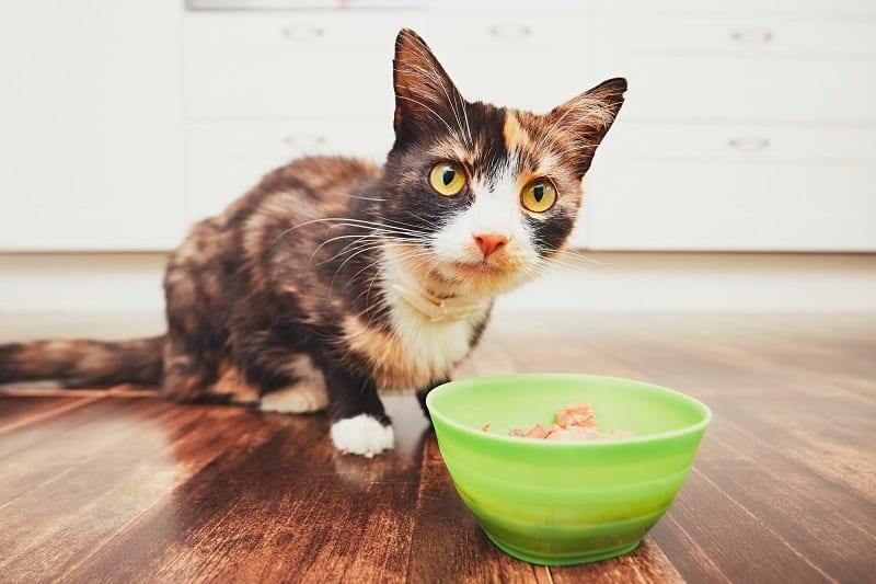 Кошка не ест влажную пищу