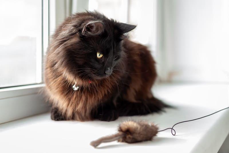 Кошка не интересуется игрушками