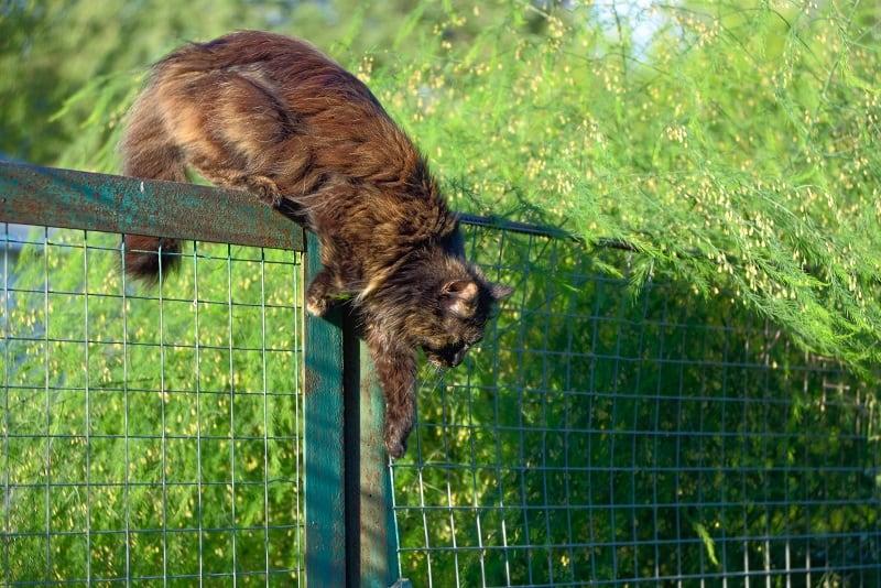 Кошка прыгает через забор