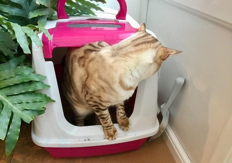 Кошка продолжает ходить в туалетный лоток, но ничего не происходит