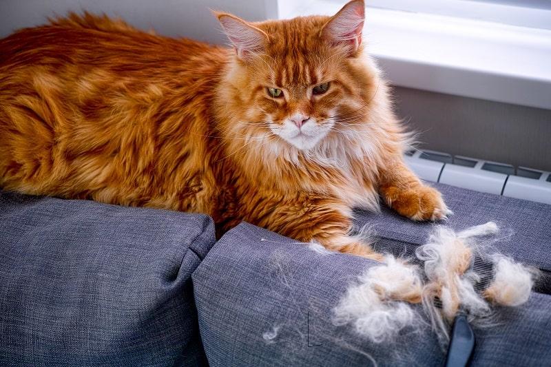 Кошка теряет клочья волос