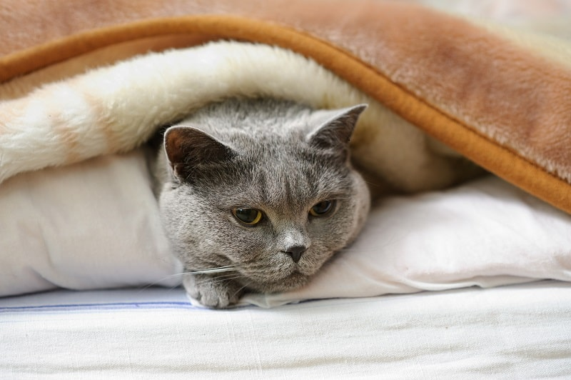 Кошка задыхается от стресса