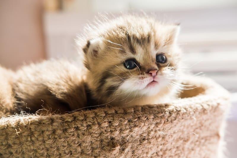 Кошки - чистые животные