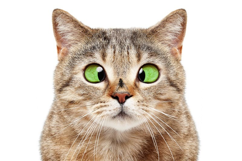 Кошки едят насекомых?