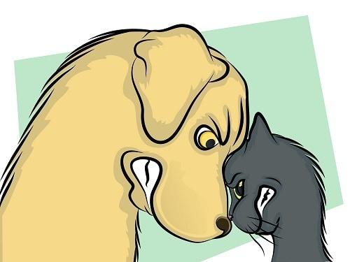Кошки и собаки живут вместе