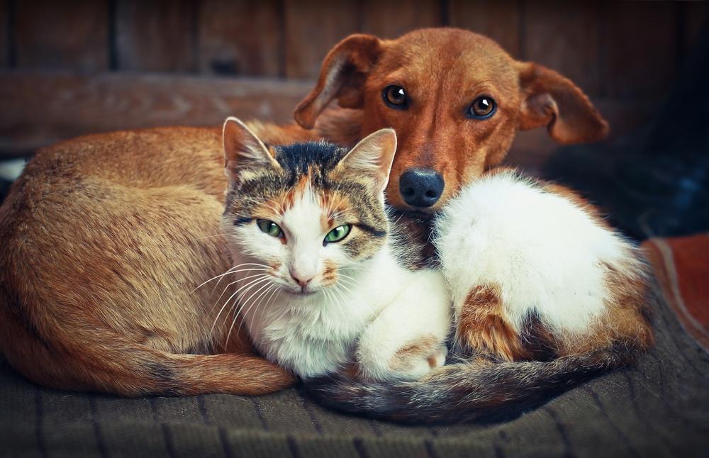 Кошка и собака, лежа
