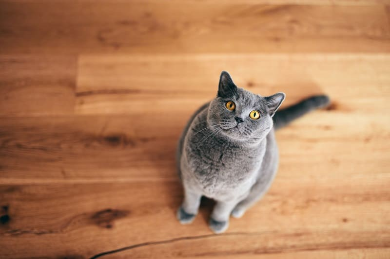 Кошки ненавидят оловянную фольгу?