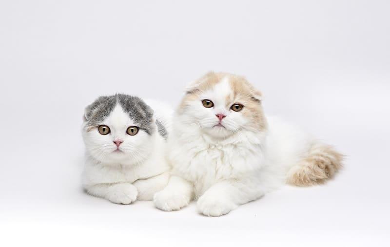 Кошки с маленькими головами