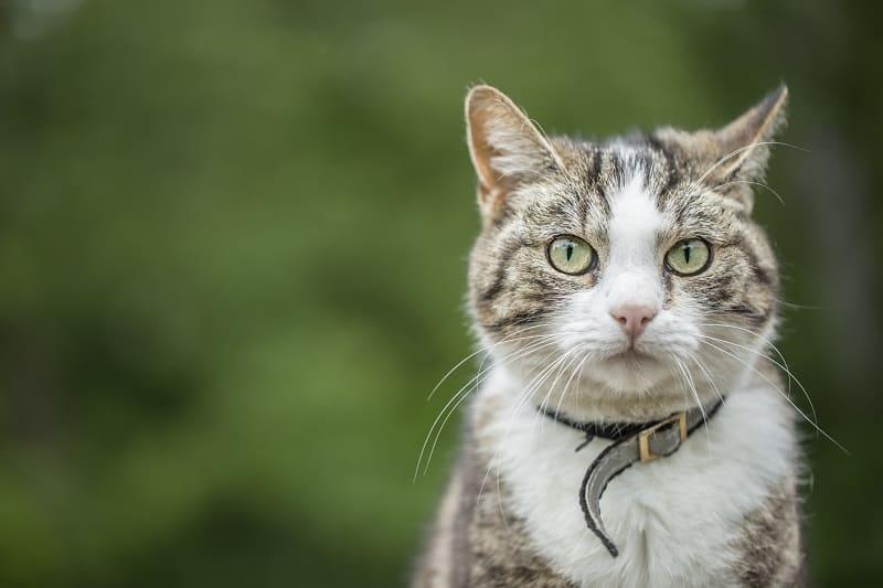 Видят ли кошки в цвете или в черно-белом