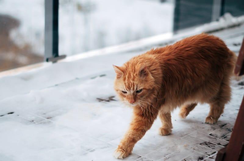 Кот не сядет всю дорогу
