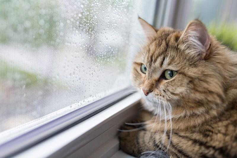 Кот плачет, когда я ухожу