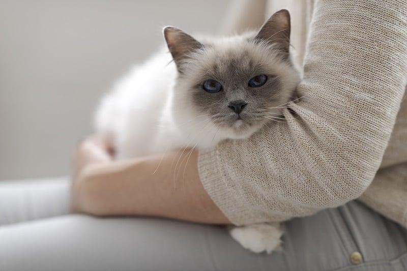 Кот продолжает чихать, но выглядит нормально