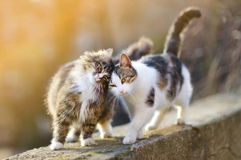 Кошки или кошки более ласковы