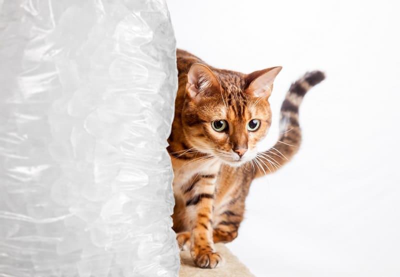 Лед вреден для кошек
