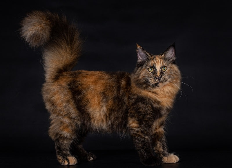 Сарай для ситцевых кошек