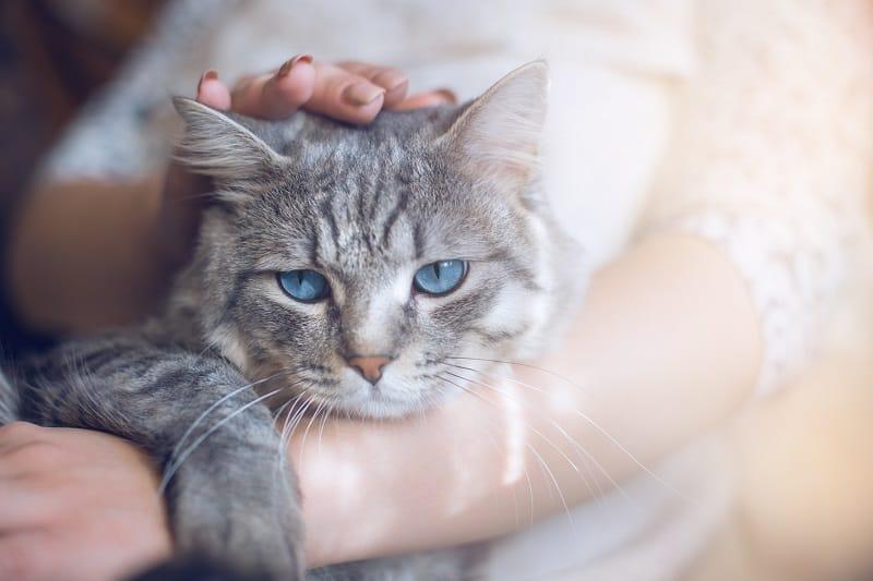 Любят ли кошки, когда их забирают