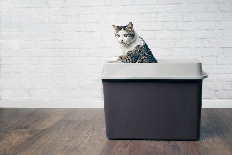 Любят ли кошки лотки с верхним входом?