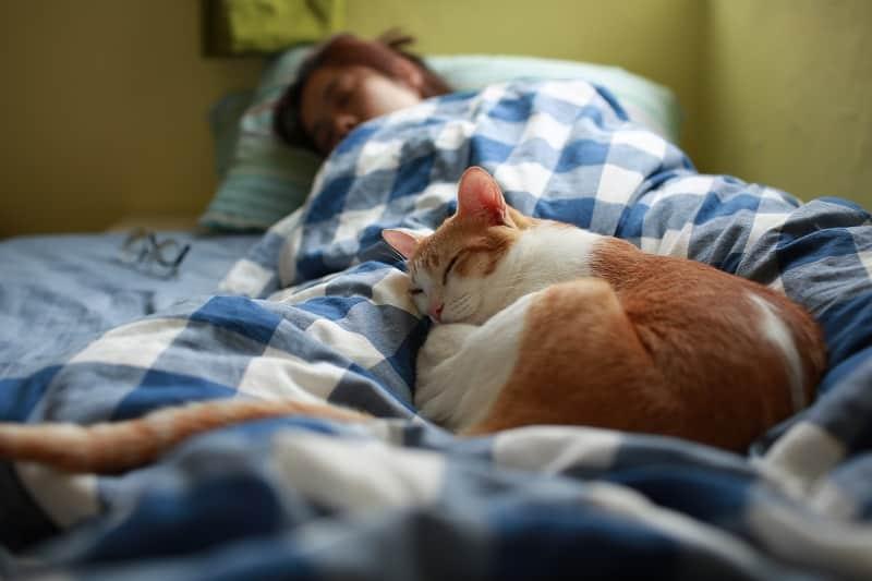 Любят ли кошки одеяла
