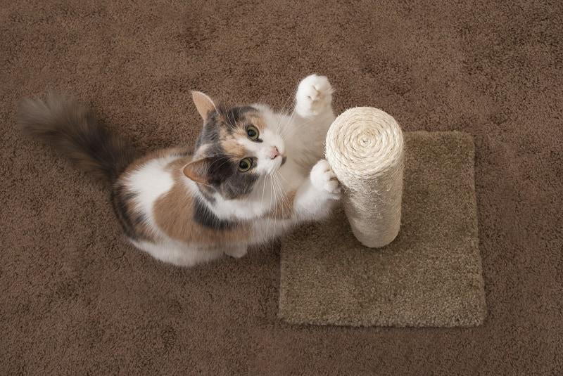 Лучшая когтеточка для кошек для подпиливания ногтей