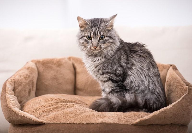 Лучшая кровать для кошек постарше