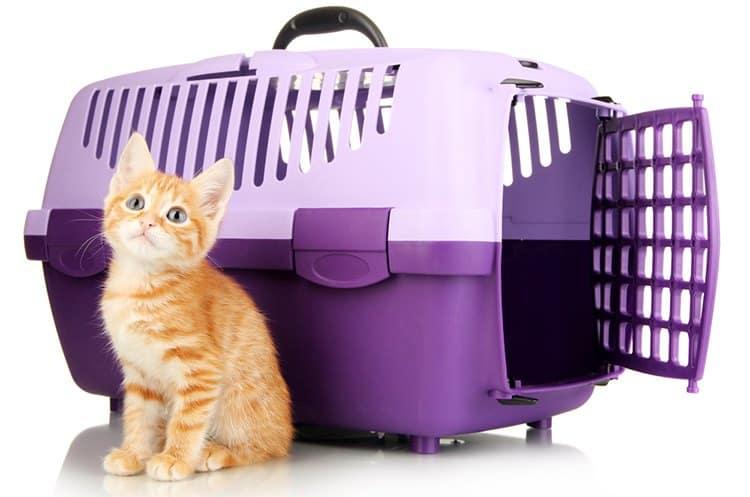 Узнайте, как выбрать лучшую переноску для кошек, и наши обзоры лучших вариантов на рынке.