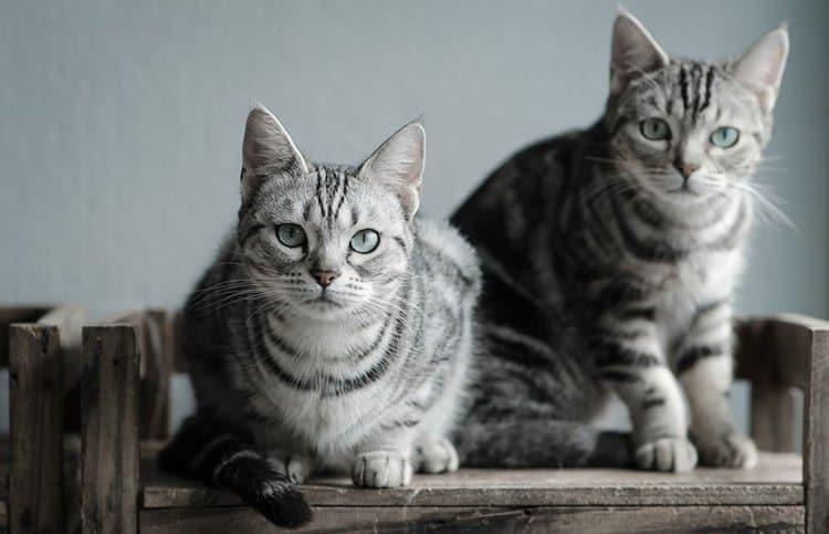 Лучшие кошки для собак