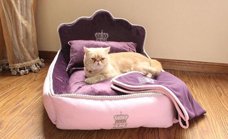 Кошки могут быть придирчивыми созданиями - ознакомьтесь с нашими лучшими выборами и советами по поиску лучшей кошачьей подстилки для котенка.