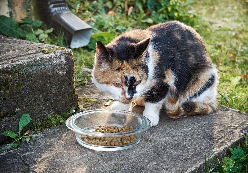 Лучший корм для пожилых кошек с плохими зубами